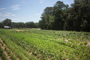 Find Organic Food On Hilton Head
